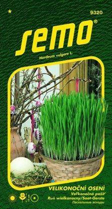 Obrázek Velikonoční tráva k pohádkové zahradě